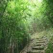 Green Bamboo Forest — Stock Photo #40164141