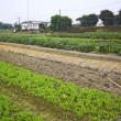 Stock Photo: Cultivated land in rural