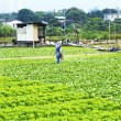 Stock Photo: Cultivated land and farmer spraying