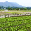 Stock Photo: Cultivated land