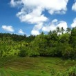 Rice terraces — Stock Video