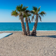 Palms Trees on the beach Spain — Stock Photo