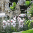 Greater Flamingos — Stock Photo #34525203