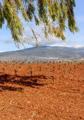View over a Vineyard looking towards the Sierra Nevada Mountains in the Alpujarras — Stock Photo