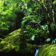 Stock Photo: Acores, small jungle valley on flores