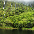 Stock Photo: Acores lagodas patos on flores island
