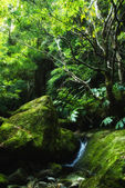 Acores, small jungle valley on flores — Stock Photo