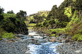 Acores, creek on flores island — Stock Photo