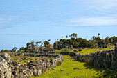 Acores, coast trail on flores island — Stock Photo