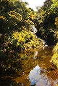 Waterfall and small creek on flores island — Stock Photo