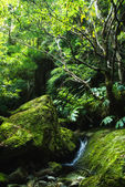 Acores small jungle valley on flores — Stock Photo