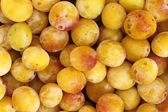 Mirabelles - Freshly Picked — Stock Photo
