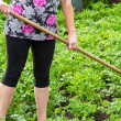 Woman hilling hoe potatoes - Stock Photo