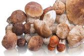 Heap porcini mushroom — Stock Photo