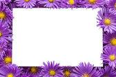 Frame / border of purple flowers — Stock Photo