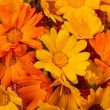 Yellow and Orange marigold flowers - Stock Photo