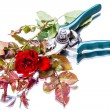 Royalty-Free Stock Photo: Garden pruner and red rose