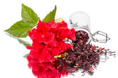 Red flower and hibiscus tea on white — Stock Photo