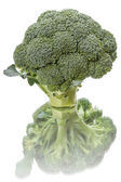 Fresh broccoli on white — Stock Photo