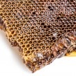 Honeycomb with honey — Stock Photo