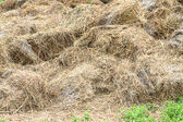 Haystack background — Stock Photo
