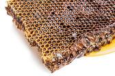 用蜂蜜蜂窝 — 图库照片