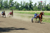 Cross-country race trotters — Stock Photo
