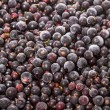 Background from the frozen black currants — Stock Photo