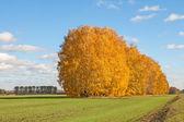 Bright autumn landscape — Stock Photo