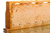 Cells of the hive with honey  — Foto Stock
