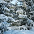 Stock Photo: Winter pine trees