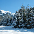Winter mountain landscape — Stock Photo #13394909
