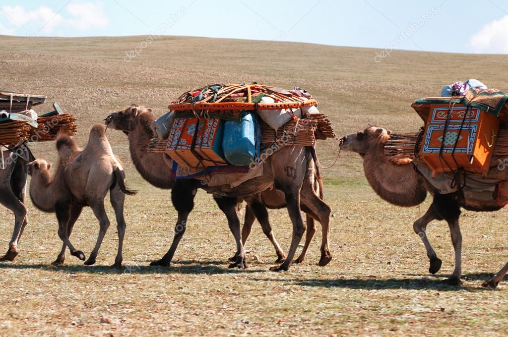 Cool Camel Caravan Related Keywords Amp Suggestions  Camel Caravan Long Tail