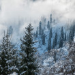 Stock Photo: Winter in the mountains
