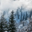 Winter in the mountains — Stock Photo #13937779