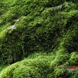 Moss background - Stock Photo