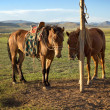 Horses on a leash — Stock Photo