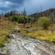 Stock Photo: Forest recovering after fire