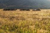 牧草地の馬の群れ — ストック写真