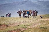 Caravan of camels in Mongolia — Stock Photo