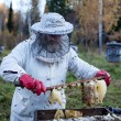 Old beekeeper gathers honey — Stock Photo