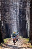 Mountain bike competition — ストック写真