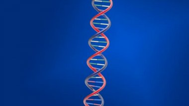 Rotating DNA string on blue background — 图库视频影像