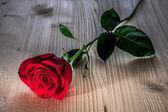 Rose rouge sur fond en bois — Photo