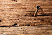 Screw in piece of old wood — Stockfoto