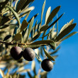 Ripe black olives on tree — Stock Photo #38921215