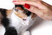 A hand petting a small cat — Stock Photo