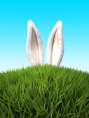 rabbit ears in the grass — Stock Photo