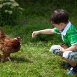 Boy is feeding chickens — Stock Photo #14029930