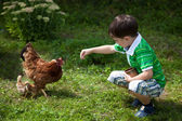 Boy is feeding chickens — Stock Photo